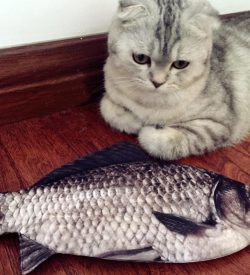 Cat Looking At Realistic Fish Pencil Case